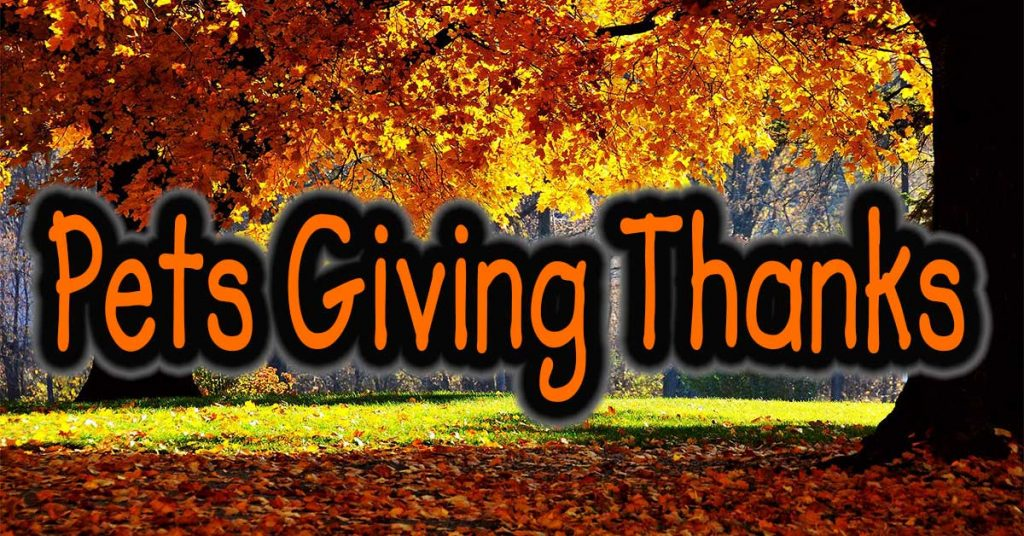 Pets Giving Thanks by Pet Sitters Club Dog Walkers
