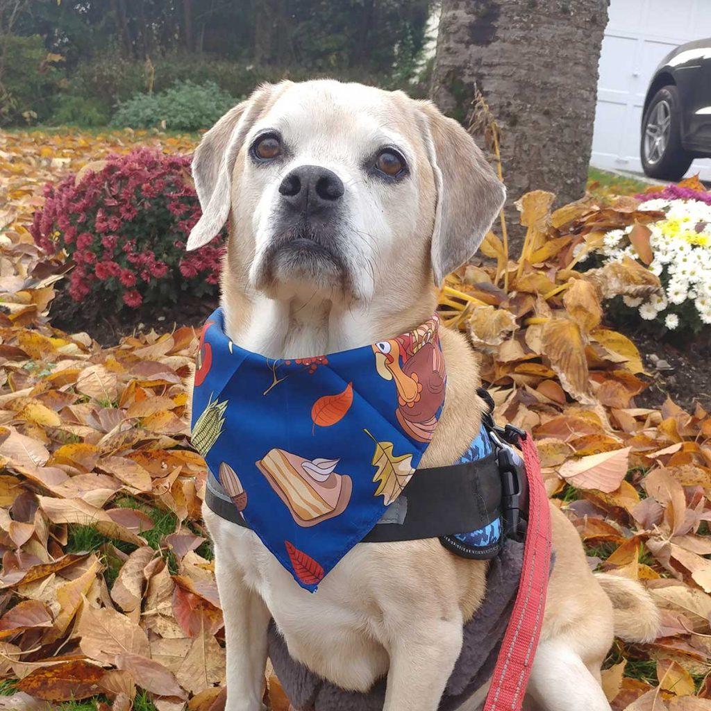Ulysses Pugle Manhasset Dog Walk